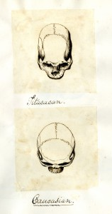sketches of two skulls