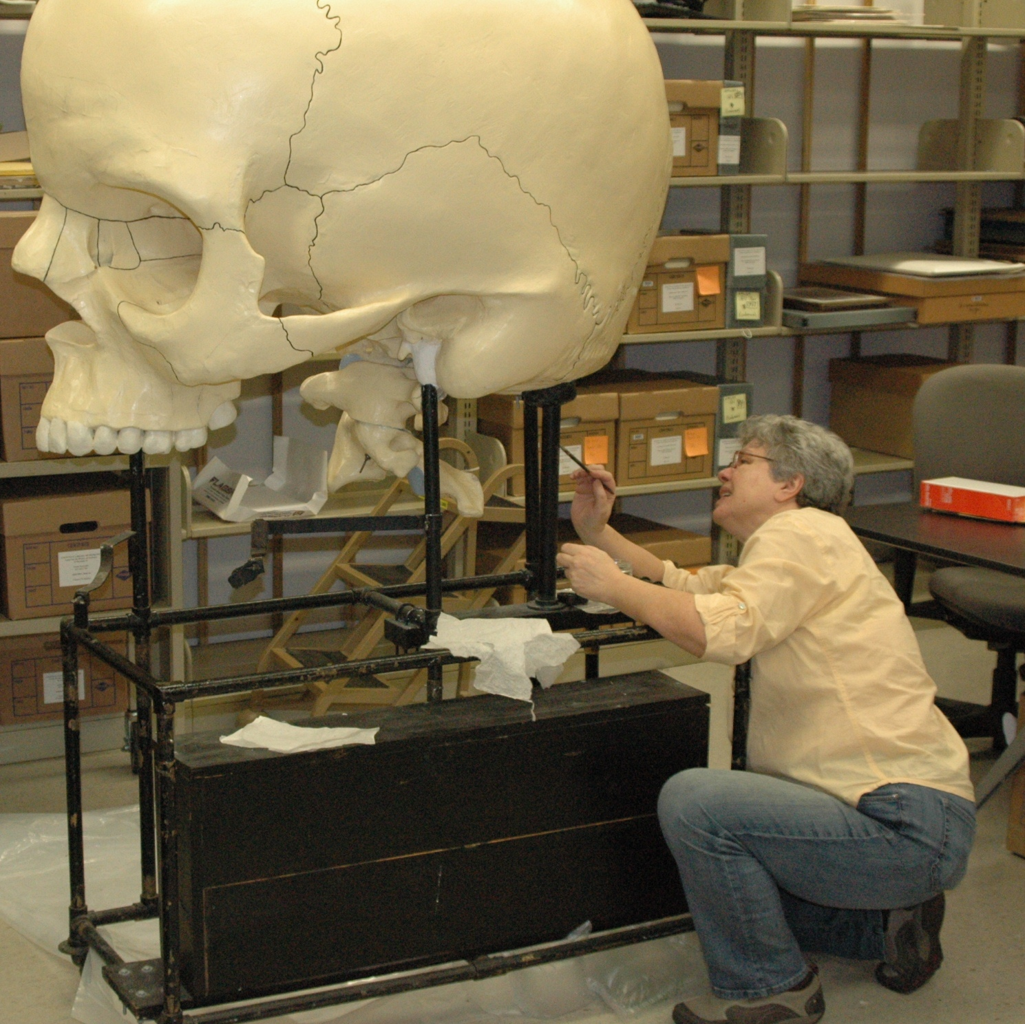Object conservator Nina Vinogradskaya working on Dwight-Emerton skull, Warren Anatomical Museum in the Francis A. Countway Library of Medicine