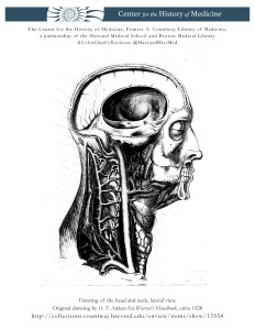 Drawing of the head and neck, lateral view. Original drawing by H. F. Aitken for Warren's Handbook, circa 1928