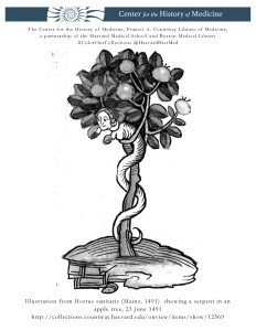 Illustration from Hortus sanitatis (Mainz, 1491) showing a serpent in an apple tree, 23 June 1491