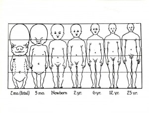 Child Development Body Proportions Diagram, undated.
