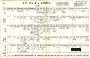 Male osseous development table (0-18 years), by Vernette S. Vickers, Harvard School of Public Health, 1943.