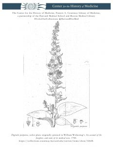 Digitalis purpurea, color plate originally printed in William Withering's An account of the foxglove, and some of its medical uses, 1785.