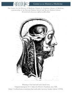 Drawing of the head and neck, lateral view, Original drawing by H. F. Aitken for Warren's Handbook, circa 1928.
