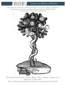Illustration from Hortus sanitatis (Mainz, 1491)  showing a serpent in an apple tree, 23 June 1491.