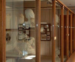 Warren Anatomical Museum Gallery